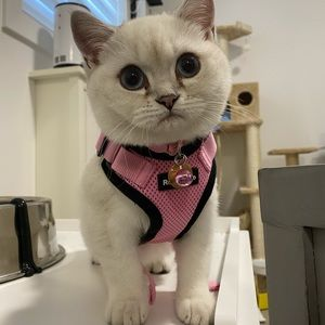 Harness and Leash for Kitten